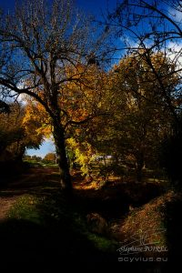 photo d'arbres en automne