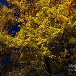 Photo de feuilles en automne