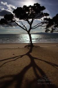 Photo soleil couchant sur un arbre