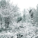 Photo hiver dans le Tarn