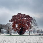 Photo neige dans le Tarn