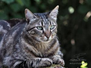 Photo portrait de chat