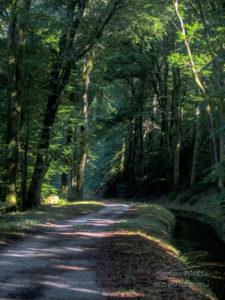 Photo forêt des Cammazes et la Rigole