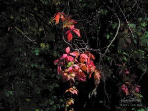 Photo de feuilles à Annecy