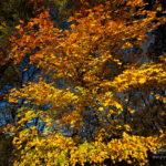Photo couleurs d'automne