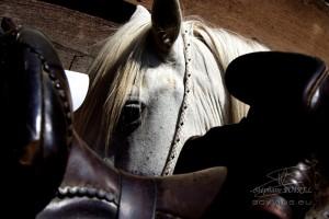 Photo cheval en Camargue