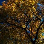 Photo de feuilles d'automne