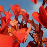 Photo de feuilles rouges en automne