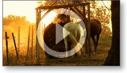 Séquence vidéo en hommage aux films de Far West