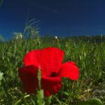 Photo Montagne Noire