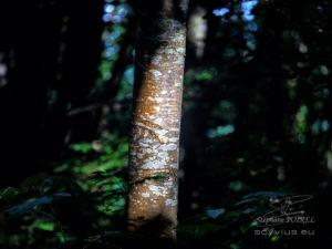 Photo forêt des Cammazes