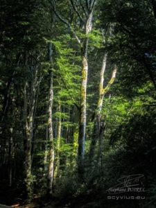 Photo forêt des Cammazes depuis la Rigole