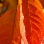 Photo feuilles en automne