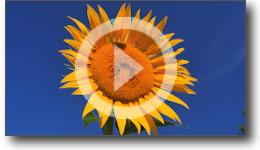 Film institutionnel sur les énergies renouvelables