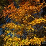 Photo couleurs d'automne