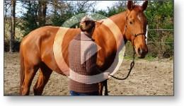 video séance éthologie cheval